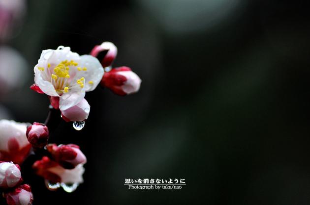DSC_1662-2.jpg